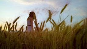 Lage die hoek van jonge romantische vrouw door rijpe tarweoren bij zonsondergang wordt geschoten stock videobeelden