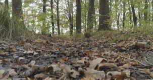 Lage die hoek van wild de herfstpark wordt geschoten in september royalty-vrije stock fotografie