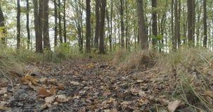 Lage die hoek van wild de herfstpark wordt geschoten in september stock afbeeldingen