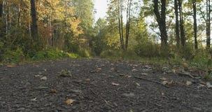 Lage die hoek van wild de herfstpark wordt geschoten in september stock afbeelding