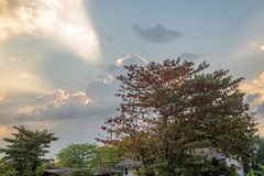 Lage hoek van boom op zonsonderganghemel met wolkenachtergrond stock foto