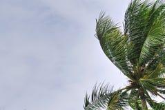 Lage Hoekmening van Kokospalm tegen Bewolkte Hemel royalty-vrije stock foto's