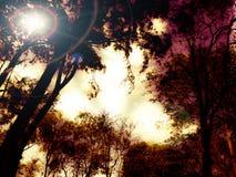 Lage hoekmening van zonlicht die door bomen stromen stock foto's