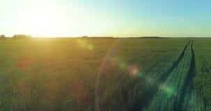 Lage hoogtevlucht boven landelijk de zomergebied met eindeloos geel landschap bij de zomer zonnige avond Zonstralen op horizon stock videobeelden