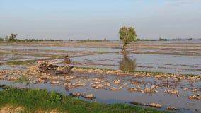 Lage luchtvlieg binnen aan landbouwer die modderig padieveld in Azië met een basishandtractor bewerken stock video