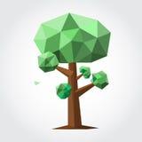 Lage polyboom met groen blad en bruine boomstam Stock Fotografie