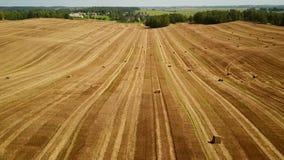 Lage vlucht over gecultiveerde gebieden met hooibergen na het oogsten Luchtmotiemening stock video