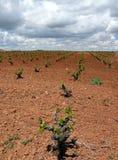 Lage wolkenwijngaarden Stock Foto's