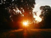 Lage zon die door bomen glanzen stock foto's