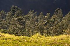 Lager av tropiska landskap Fotografering för Bildbyråer