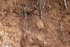 Lager av våt jord för jord rotar i zoner för jord för jordjordprofil Arkivfoto