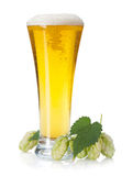 Lager beer cup and hop branch Royalty Free Stock Image
