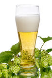 Lager beer and hops with reflection Royalty Free Stock Photography