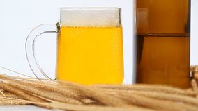 Cold Beer With Wheat. Lager Beer With Wheat On Table stock video