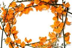 Lager frame Royalty-vrije Stock Fotografie