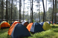 Lager im Wald Stockfoto