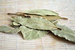 Lagerbladar Laurel Leaves på en ljus bakgrund Arkivbild
