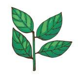 Lagerbladkryddasmaktillsats som isoleras på vit för mat- och smaktillsatsanis för bakgrund hand dragen aromatisk grön arom stock illustrationer