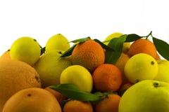 Lagerföra av citrusfrukter Arkivbilder