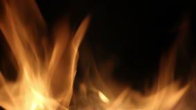 Lagerfeuer in der Nacht Das Brennen meldet nahes hohes der orange Flammen an Hintergrund des Feuers Sch?nes Feuer brennt hell stock footage
