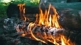 Lagerfeuer der Niederlassungen brennen in der Waldzeitlupe stock video footage