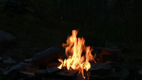 Lagerfeuer im Wald nachts stock footage