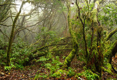Lagerskog i kanariefågelöar Royaltyfri Foto