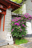 Lagerstromia indica linn with  chinese building Royalty Free Stock Photo