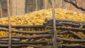 Lagerung des trockenen Maiskolbens Lizenzfreies Stockbild