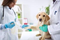 Laget av veterinär- tar omsorg av hunden Arkivfoto