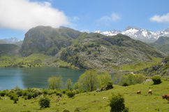 Laghi di Covadonga in Asturie immagine stock