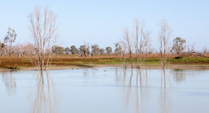 Laghi morti Australia Menindee degli alberi di Mystrious fotografie stock libere da diritti
