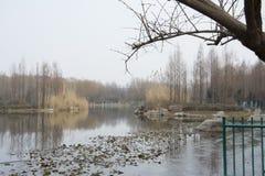 Laghi nell'inverno Fotografia Stock Libera da Diritti