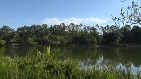 Laghi springfield nella città di Ipswich, Queensland, Australia video d archivio