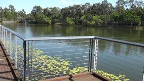 Laghi springfield nella città di Ipswich, Queensland, Australia stock footage