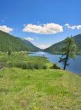 Laghi Ulagan Montagne di Altai, Siberia La Russia Immagine Stock