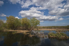 Lago, árboles y nubes Imagen de archivo