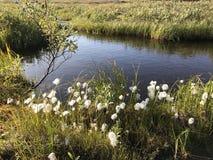 Lago ártico Fotografía de archivo libre de regalías