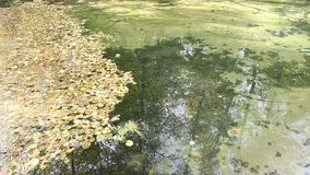 Lago almacen de metraje de vídeo