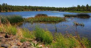 Lago 7 forest Foto de Stock