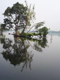 Lago Fotografia de Stock