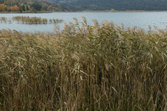 Lago Abant Fotos de archivo