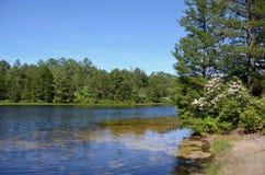 Lago Absegami Fotos de Stock Royalty Free