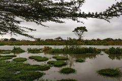 Lago africano con las islas Kenia de la hierba Foto de archivo libre de regalías