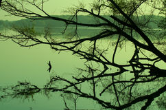 Lago Ahmadabad Thol, gujarat Imagem de Stock