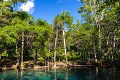 Lago ainda azul na floresta tropical Imagens de Stock