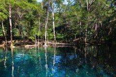 Lago ainda azul na floresta tropical escura Fotos de Stock Royalty Free