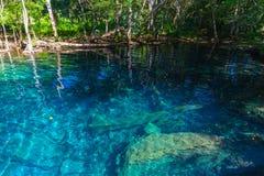 Lago ainda azul na floresta tropical selvagem Fotos de Stock Royalty Free