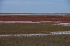 Lago alba Balta in autum con i colori piacevoli Fotografia Stock Libera da Diritti