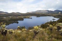 Lago alla Colombia Fotografia Stock Libera da Diritti